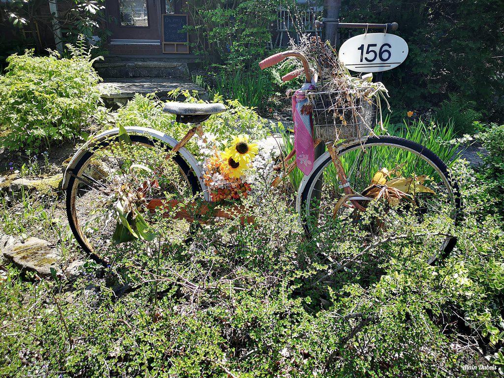 Alain Dubois: Vélo fleuri