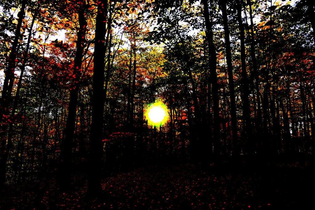 La forêt de la discorde…