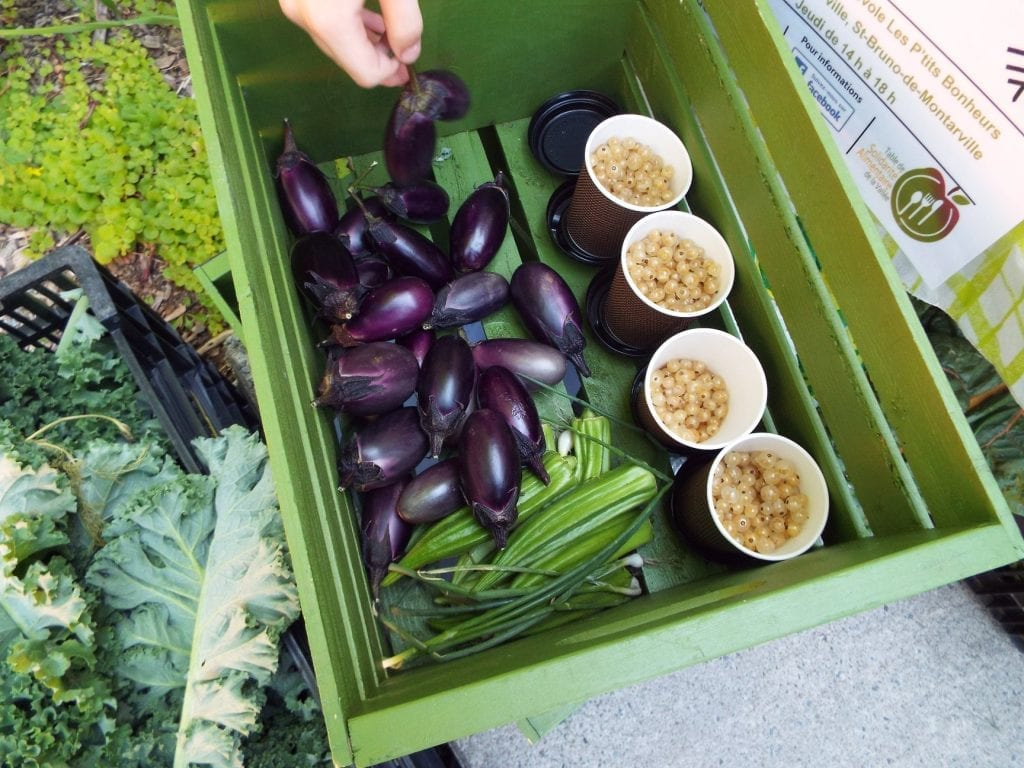 À Saint-Bruno: Surplus de potager à partager