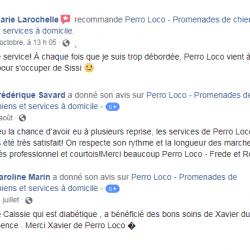 Perro Loco – Promenades de chiens et services à domicile
