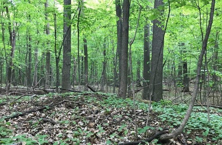 Saint-Bruno-de-Montarville: Le boisé des Hirondelles est en bonne voie d'être sauvé!