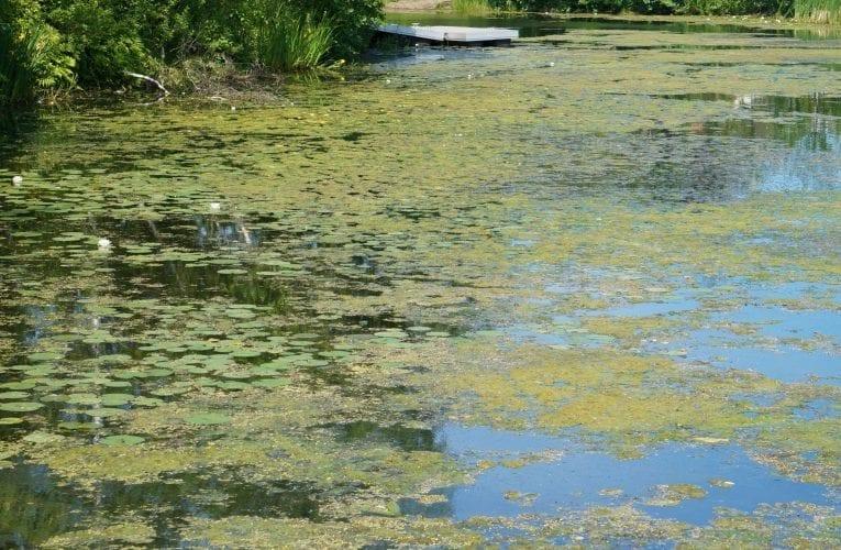 Lac du Village:  Un plan d'action qui nous empêche de passer à l'action.