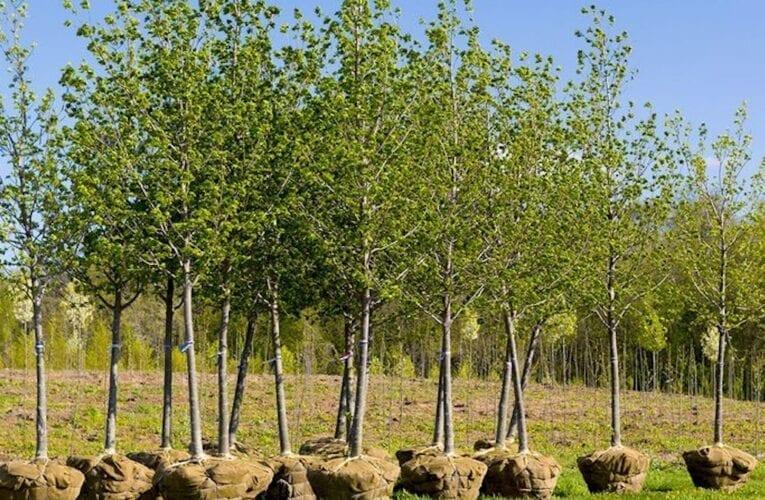 Une forêt urbaine expérimentale à Saint-Bruno