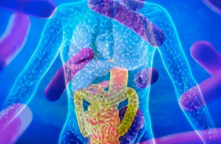 Comment le microbiome peut nous aider à renforcer notre immunité contre la Covid-19
