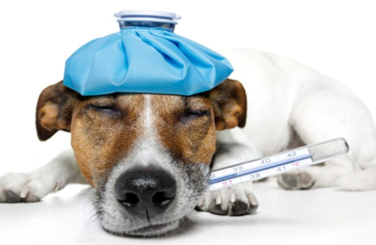 Éclosion de toux de chenil au parc canin de Saint-Bruno-de-Montarville