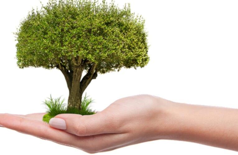 Saint-Bruno-de-Montarville: Édition 2021 du programme de don d'arbres