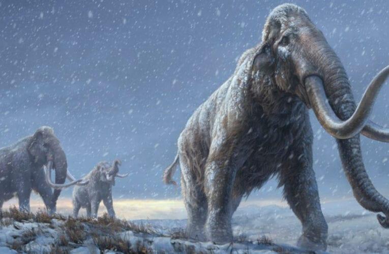 Le séquençage ADN de mammouths vieux d'un million d'années révolutionne nos connaissances sur eux