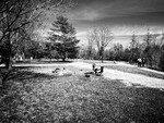 Alain Dubois: Parc du Lac du Village